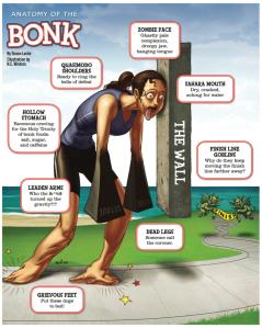 anatomy of the bonk